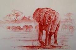 """Bull Elephant testing the air"", Okavango Delta, Africa"