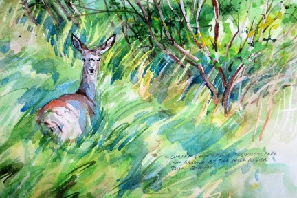 Mule Deer Writing-on-Stone Provincial Park, Watercolour and pencil