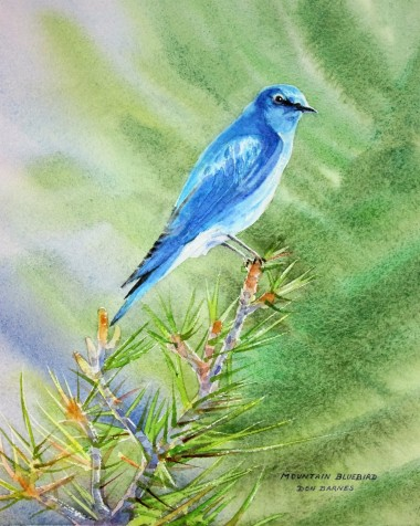 Mountain Bluebird, Yellowstone National Park Watercolor
