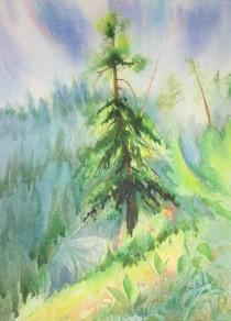 Douglas Fir tree on the Sunshine Coast. Watercolor