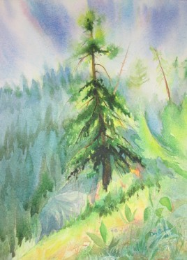 Douglas Fir tree on the Sunshine Coast. Watercolor