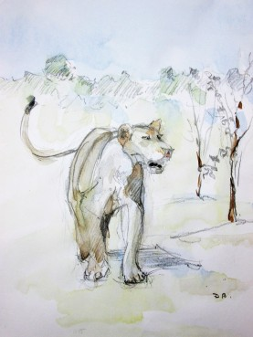 Lion Sketch#1 Pencil and watercolor wash