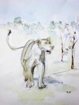 Lion Sketch#1 Pencil and watercolor wash
