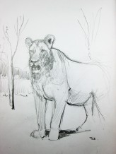 Lion Sketch #2 Pencil