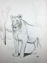 Lion Sketch #2 Pencil