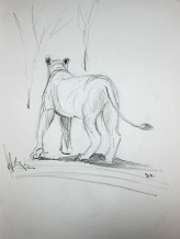 Lion Sketch#3 Pencil