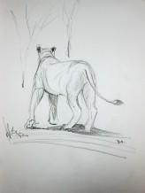 Lion Sketch#3 Pencil