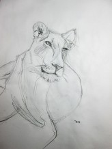 Lion Sketch#4 Pencil