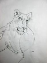 Lion Sketch#4 Pencil