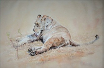Female Lion in Zimbabwe Watercolor 15 inches x 22 inches