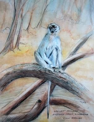 vervet-monkey-zimbabwe