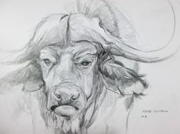 Cape Buffalo in Chobe National Park, Botswana. Pencil Sketch