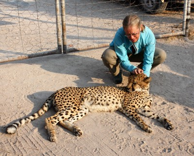 The tame cheetah's were very gentle and were the farmers family pets.