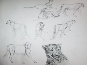These drawings are from my sketch book.