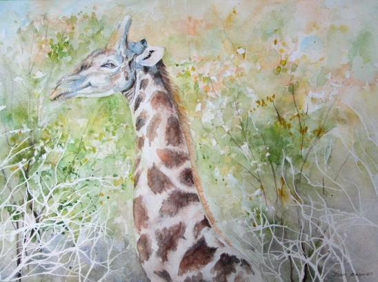 This is an experimental watercolour I did. It is a combination of wet on wet and glazing techniques. For some reason this Giraffe seems to have a Mona Lisa Smile.